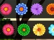 Çiçek Patlat